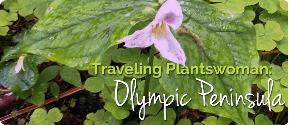 Traveling Plantswoman – Spring on the Olympic Peninsula