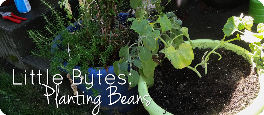 Little Bytes: Beans