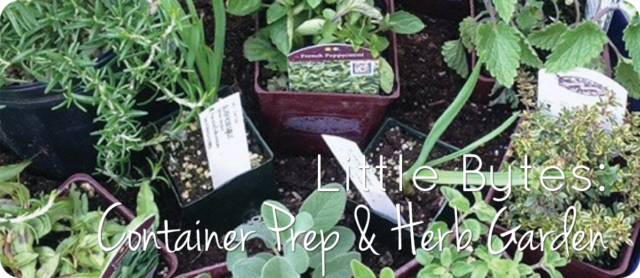 Little Bytes: Container Prep and Herb Garden
