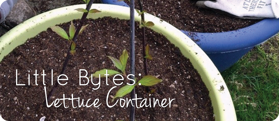 Little Bytes – Lettuce Container