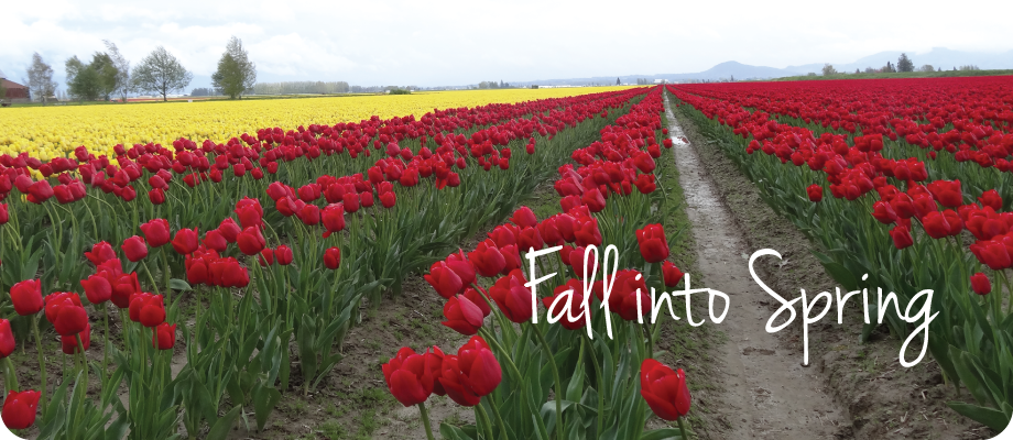 Fall into Spring