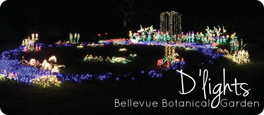 Bellevue Botanical Garden D'lights