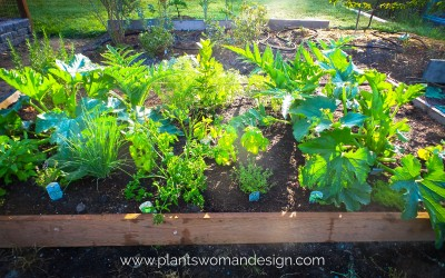 Raised Bed Gardening