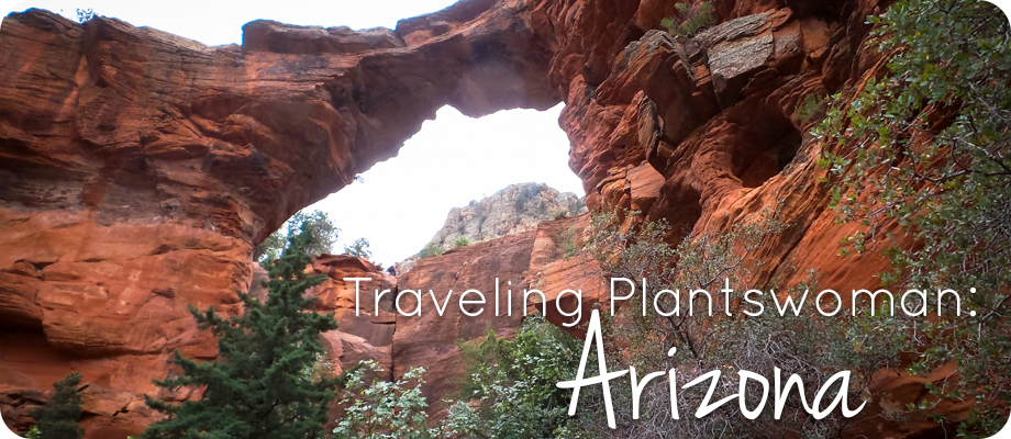Traveling Plantswoman: Arizona