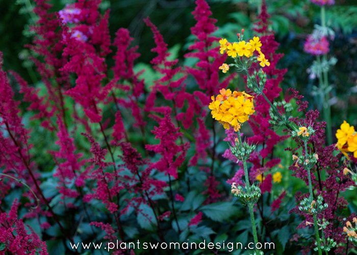 plantswoman design crazy color combinations