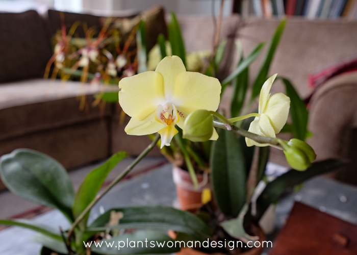 Indoor Gardening – January Beauty