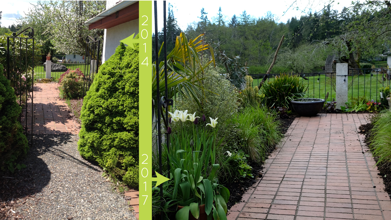 plantswoman design before/after of Beach Road Garden front walk