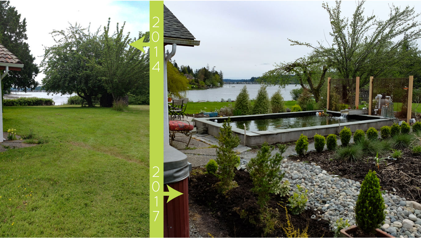 plantswoman design before/after of Beach Road Garden koi pond