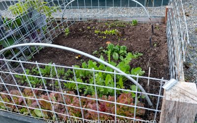Protecting Your Vegetable Garden: Galvanized Fencing